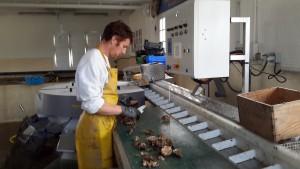 huitre creuse penestin loire atlantique