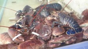 plateau crustaces penestin morbihan