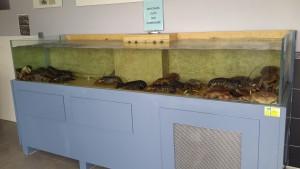 plateau crustace asserac loire atlantique