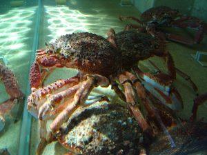 plateau crustaces guerande loire atlantique