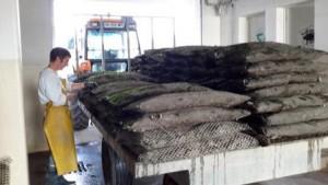 cuisson des crustaces asserac loire atlantique