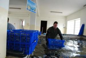 soupe de poisson mesquer loire atlantique